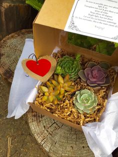 Succulent Treasures Gift Box. Four Assorted Premium