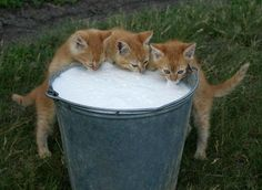 milk... mmm..