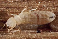 Unique Termites In Basement