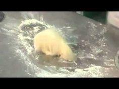 Pokrmy k rodinnému stolu Pohlreich 28 - YouTube Polar Bear, Youtube, The Originals, Youtubers, Youtube Movies