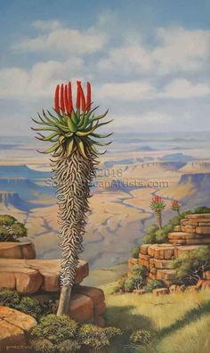 Aloe with Karoo Vista Plant Painting, Plant Art, Landscape Art, Landscape Paintings, Jungle Illustration, African Plants, Weird Plants, Succulent Landscaping, Farm Art