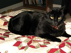 ❤ =^..^= ❤  cats on quilts