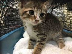 7 WEEKS OLD - VERY SOCIAL AND SEEKS ATTENTION - NEEDS FOSTER!