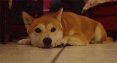 doge-ears