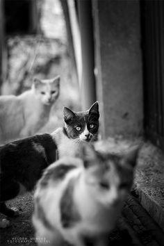 """""""look at those three kitties"""""""