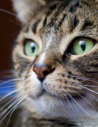 Decode Your Pet's Body Language