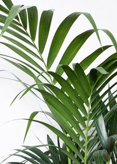 5 Tips to Keep Your House Plants Healthy - Pflanzen Leave In, Tropical Leaves, Tropical Plants, Planet Decor, Green Leaves, Plant Leaves, Plants Are Friends, Palmiers, Unique Plants
