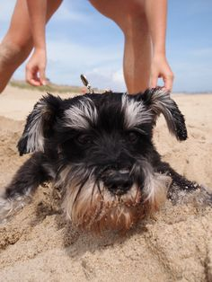 Oliver being buried in the sand!