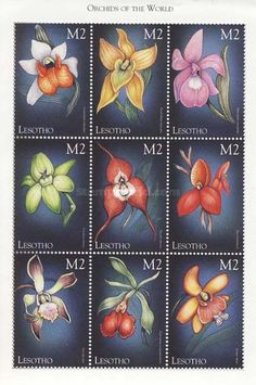Buy and sell stamps from Lesotho. Meet other stamp collectors interested in Lesotho stamps. Sell Stamps, Stamp Catalogue, Postage Stamps, Orchids, Type, Lilies, Stamps, Orchid