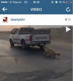 Justice for dog dragged behind SUV in Saudi Arabia! We demand animal protection laws! | YouSignAnimals.org