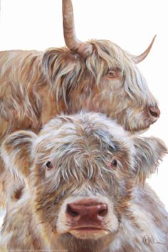 Highland cow and calf by Wendy Darker £40