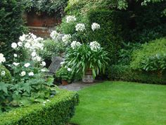 White Agapanthus and Anemone japonica 'Honorine Jobert': Garden renaissance Simply gorgeous! Small Urban Garden Design, Lawn And Landscape, Vertical Garden Plants, Traditional Garden, Small Urban Garden, Outdoor Gardens, White Gardens, Cottage Garden, White Flowers Garden