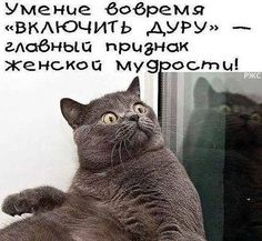 This Pin was discovered by ИРИ Cute Funny Animals, Funny Cute, The Funny, Russian Jokes, Funny Expressions, Funny Cats And Dogs, Funny Phrases, Clever Quotes, Videos Online