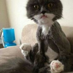 Oh my god! I'll never shave my cat! #CreepyThingsHappens, #PhotographerSomeone10X