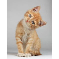 Want more cute kittens? Click the photo for more! - Catherine Capen - - Want more cute kittens? Click the photo for more! Want more cute kittens? Click the photo for more! Pretty Cats, Beautiful Cats, Cute Baby Animals, Funny Animals, Animals Images, Wild Animals, Easy Animals, Arctic Animals, Funny Cats