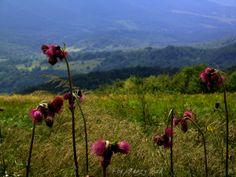 Bieszczady mają swój niepowtarzający urok. http://salvadofotografia.blogspot.com/2013/09/moje-podroze-po-ukochanej-polsce.html