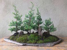 Bosque de pinos por giovanny mendoza pidelo a domicilio  3125874074 Majesticflowers.sas@gmail.com Mendoza, Plants, Woods, Plant, Planets