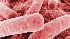 #An American woman just died from a superbug resistant to 26 different antibiotics - CBC.ca: CBC.ca An American woman just died from a…