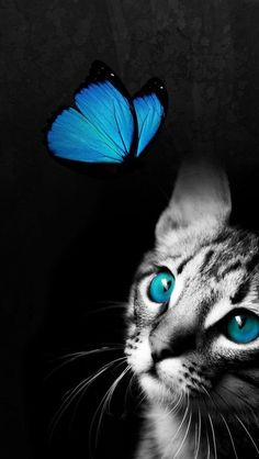 Love this picture! Blue eyes, blue butterfly