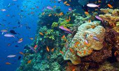 underwater in great barrier reef