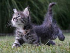 Confident Kitty