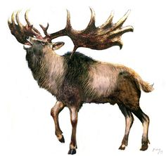 """Art illustration - Prehistoric Mammals - Megaloceros: Deer extinct genus have been found across Eurasia since the late Pliocene to the Pleistocene, they were very expanded herbivores during the ice ages. usually popularly it is known as """"Irish elk"""" for the abundant findings of specimens preserved in the peat bogs of Ireland."""