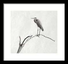 Art Prints For Sale, Art For Sale, Fine Art Prints, Framed Prints, Canvas Prints, Art Sites, Animals Images, Various Artists, Heron