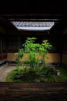 無鄰菴・夏 : 花景色-K.W.C. PhotoBlog