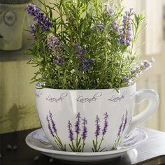 19 Tea Herbs to Make a Tea Herb Garden. It is a wonderful accent that can go along with the rest of your garden and brings you the joy of fresh herbs, you can use these herbs to prepare aromatic, healthy and tasty herbal teas of different flavors. Herb Garden, Indoor Garden, Indoor Plants, Outdoor Gardens, Lavender Cottage, Lavender Fields, Lavander, Lavender Garden, Lavender Plants