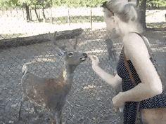 It's a polite deer~
