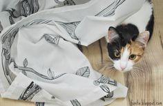 Kitten and window curtain