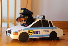 Wiener Dog Police Department - read more and watch video here