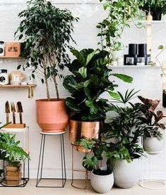 48 lovely indoor jungle decor ideas home decor комнатное сад Indoor Plant Pots, Indoor Garden, Potted Plants, Home And Garden, Balcony Garden, Interior Plants, Interior Design Kitchen, Plant Wall, Plant Decor
