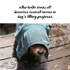 Haiku by Dog: after-bath shake off / drenches nearest human in / dog's fitting payback