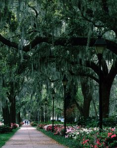 Savannah.  Day or night, rain or shine, summer or winter...this is one of the most beautiful places in the country.
