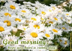 Good Morning everyone - http://greetings-day.com/good-morning-everyone.html