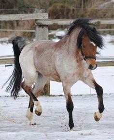 What a pretty pony.