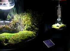 xDesign's fabulous Air-Filter Plant Lamp  Combining LED lighting with indoor air purification using living plants, the fabulously innovative Green Light by Natalie Jeremijenko, Amelia Amon, Will Kavesh of the Experimental Design Lab is a chandelier, terrarium,
