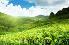 munnar sightseeing. http://www.munnar.info/