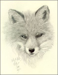 Foxes Artist | To return to this page from any thumbnail link please click on the ...