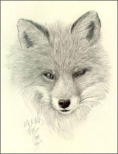 fox drawing - Sök på Google