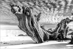 newfrontiers photography - Ostseestrand mit alter Baumwurzel (schwarz weiß)