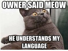 too funny!!! .. meow ^.^