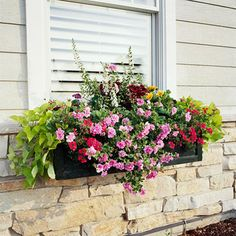 Pick Easy-Growing Plants; Petunia, Verbena, Coleus, Sweet Potato vine, Angelonia