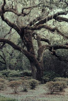 birch & willow//