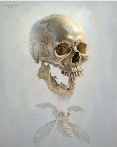 Jolly Roger by David Cheifetz Oil ~ 14 x 11 Amazing light and edges in this painting. Skull Reference, Skull Artwork, Jolly Roger, Anatomy Art, Skull Design, Fantastic Art, Awesome, Skull And Bones, Dark Art