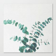 buy eucalyptus ii canvas print by cassiabeck worldwide shipping available at society6 com just one of millions of high quality products available