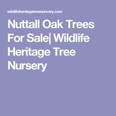 Nuttall Oak Trees For Sale