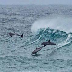Muhteşem yüzücüler :)