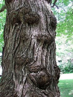 "13 We can see a lot in the shapes of trees, especially the formations their bark takes. No doubt you've spotted a tree or two and said, ""Hey! That looks just like a."" This particular tree looks like it just might start talking to you. Weird Trees, Magical Tree, Tree People, Tree Faces, Unique Trees, Tree Carving, Tree Sculpture, Metal Sculptures, Abstract Sculpture"